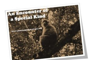 AN ENCOUNTER OF A SPECIAL KIND-STORY