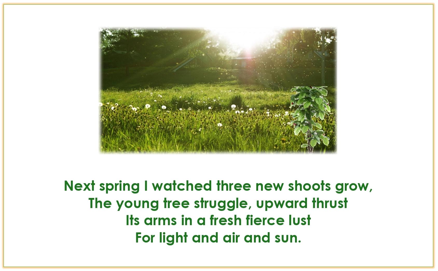 Std.11=Poem-CHERRY TREE-A Pictorial Presentation2_page-0009