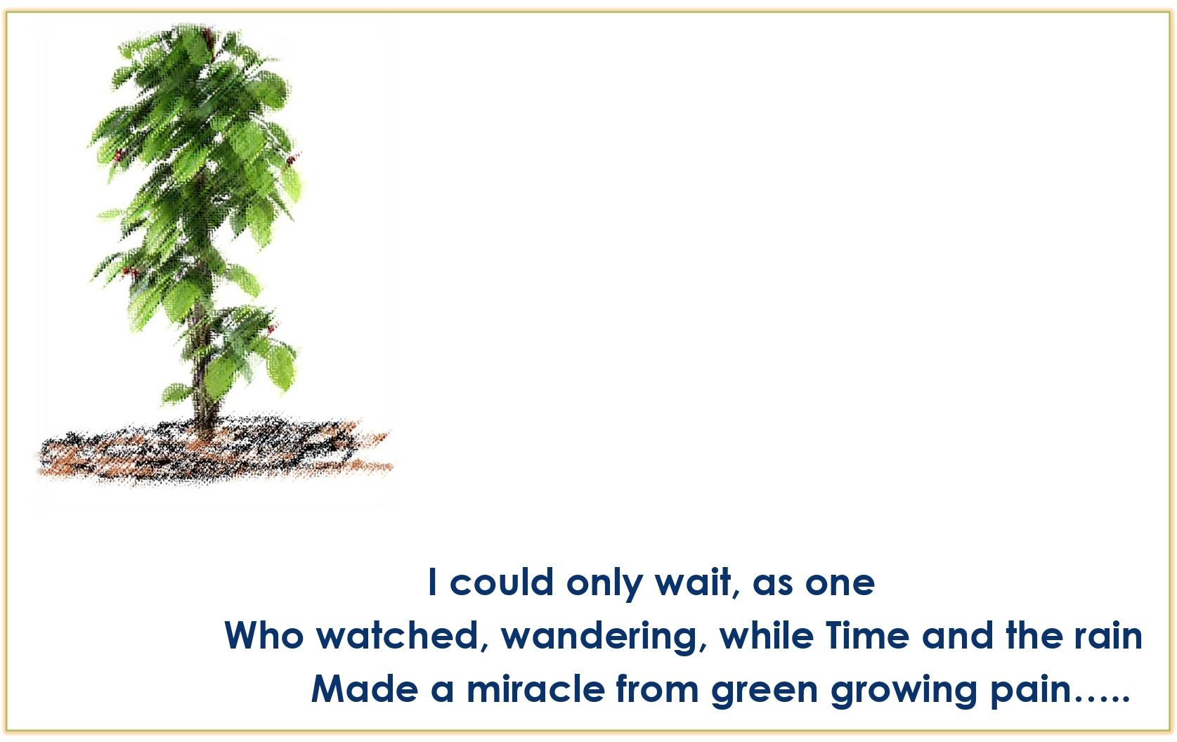 Std.11=Poem-CHERRY TREE-A Pictorial Presentation2_page-0010