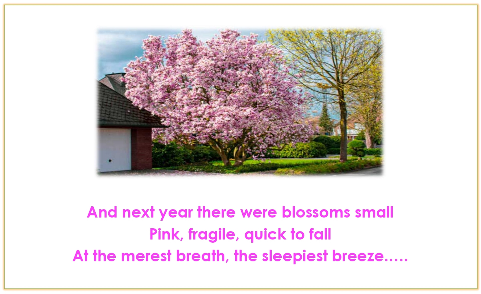 Std.11=Poem-CHERRY TREE-A Pictorial Presentation2_page-0012